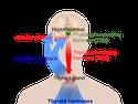 Regulation of Hormone Production