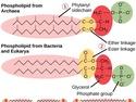Structure of Prokaryotes