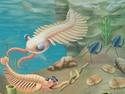 The Evolutionary History of the Animal Kingdom