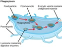The Endomembrane System and Proteins