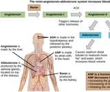Biology, Animal Structure and Function, Osmotic Regulation and Excretion, Hormonal Control of Osmoregulatory Functions