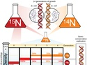 Basics of DNA Replication
