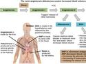 Hormonal Control of Osmoregulatory Functions