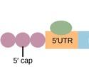 Eukaryotic Post-transcriptional Gene Regulation
