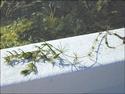 Green Algae: Precursors of Land Plants