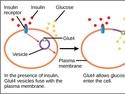 Regulation of Cellular Respiration